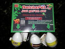 HatchaPet.com Eggs - Growing Pet Dinosaur Eggs - Hatching - 3 Eggs - Best Price