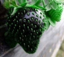 Black Strawberry Seeds -Lower in Sugar and Acid!Delicious
