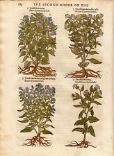 1597 Gerard Antique Herbal Historie of Plantes Handcolored 4 woodcuts Canterbury