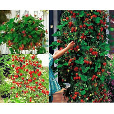 Organic Vegetable Red Herb Seeds Strawberry Seed Home Garden Plants Seeds 100pcs