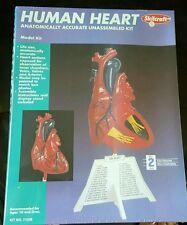 *NIB* Skilcraft Model of Human Heart Unassembled Kit #71338