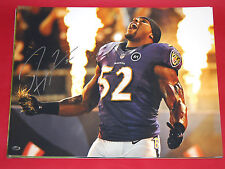 RAY LEWIS AUTOGRAPHED BALTIMORE RAVENS 16 X 20  PHOTO AASH