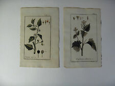 2 Hand Colored Botanicals Johannes Zorn c. 1780 #91 and #44