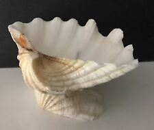 """Giant Clam Shell Tridacna Gigas 8"""" X 6"""" Soap Stand Maritime Decoration"""