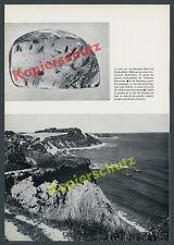 Bernstein Samlandküste Ostsee Insekten Einschlüsse Harz Geologie Ostpreußen 1968