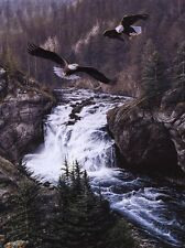 Land of the Free By Alan Hunt Eagles, Print 18x24