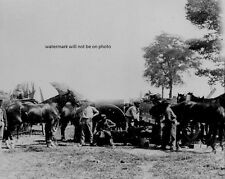 "Army blacksmith and forge at Antietam 8""x 10"" Civil War Photo Picture #45"