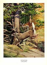"""1957 Vintage FRANCIS LEE JAQUES """"WHITE-TAIL DEER"""" Color Art HUNTING Lithograph"""