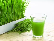 ORGANIC Natural WHEATGRASS Seeds Home Grown FRESH JUICE Shots Cleanse DETOX 1KG