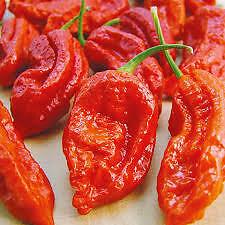 CHILLI PEPPER Bhut Jolokia- Naga Jolokia Garden Rare Giant Spices  - 50 Seeds
