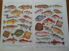 British Sea Fish Ocean Fishes of Foriegn Seas 1924 Small Pages Ideal to Frame ?
