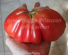 SICILIAN SAUCER Tomate 10 semillas muy raras para Pasta y de