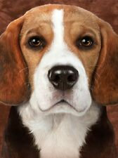 3D Picture Dogs Beagle head and shoulders Size 39 x 29 cm approx New