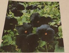 """Pack of 20 """"Swiss Giant""""  Pansy Seeds NEW!"""