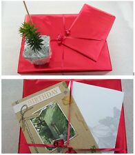BIRTHDAY GIFT ARAUCARIA ARAUCANA Monkey Puzzle Tree - CARD - MESSAGE - RIBBON