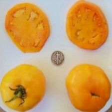 Golden Jubilee - Organic Heirloom Tomato Seeds - Awesome Gold Slicer - 40 Seeds