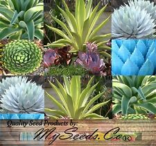 (20) Agave Species Seeds Mix, Excellent House Plants  - Combined S&H