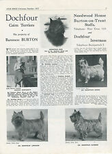 CAIRN TERRIER OUR DOGS 1951 DOG BREED KENNEL ADVERT PRINT PAGE DOCHFOUR KENNEL