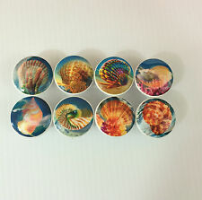 Set of 8 Colorful Sea Shells Cabinet Knobs Drawer Knobs Nautical