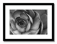 Succulent - 17x21 Framed Art Print Black (or White) Mat and Black Wood Frame