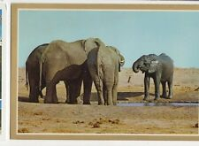Elephants At Waterhole In Game Reserve South Africa Old Postcard 050a