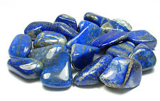 TUMBLED - (2) MED/LG LAPIS LAZULI Crystals with Description Card - Healing Stone
