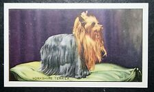 YORKSHIRE TERRIER    Original 1930's Colour Card # VGC