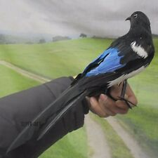 Fake Artificial Magpie Bird Realistic Taxidermy Natural Home Decor Toy Gift 30cm