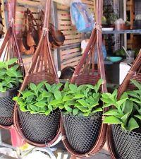2 Plant Basket Hanging Flower Pot Hanger Garden Planter Hook Home Holder Decor