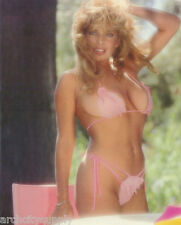 SMALL POSTER :  PINK BIKINI  - SEXY FEMALE MODEL - FREE SHIPPING     LC15 Q