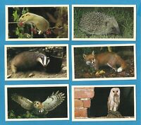 Players Grandee cigar / cigarette cards - BRITAINS NOCTURNAL WILDLIFE 1987 set