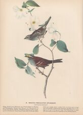 "1942 Vintage AUDUBON BIRDS #8 ""WHITE THROATED SPARROW"" Full Color Art Lithograph"