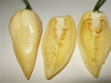 BHUT JOLOKIA WHITE pure seeds