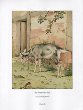 BEAUTIFUL VINTAGE BIRD PRINT ~ INDEPENDENT GOAT ~ OUR LITTLE NEIGHBOURS DETMOLD