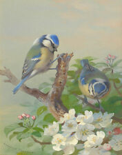 Thorburn Archibald Two Blue Tits On A Tree Branch Print 11 x 14     #6278