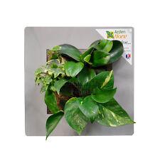 Cadre végétal Arden Flore Gris Perle 30x30cm (tableau végétalisé plantes déco)
