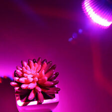 E27 6W 2Red 1Blue LED Grow Light for Succulents, cactus and Herbs Plants