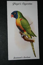 Rainbow Lorikeet    Vintage Illustrated Card   VGC