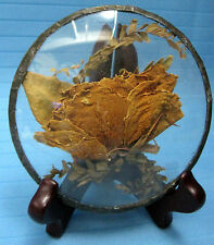 Real Rose Dried Natural Flower Sealed in Glass on Wood Stand