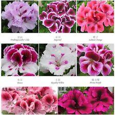 35pcs Geranium seeds Pelargonium hortorum 7 Color Available Balcony Garden Plant