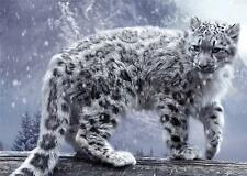 PHOTOGRAPH NATURE ANIMAL BIG CAT SNOW LEOPARD CUTE COOL ART PRINT POSTER GZ5745