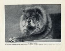 "CHOW CHOW CHAMPION DOG ""ROWCHOW DRAGOON"" LOVELY ORIGINAL PRINT PAGE FROM 1934"