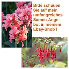 Fuchsie und Blumenrohr - zwei tolle Blumen - im Blumen-Samen-Spar-Set !