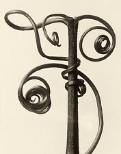 Masters of Photography: Karl Blossfeldt: Cucurbita - Digital Photograph
