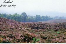Scotland : Heather and Mist : Calluna vulgaris