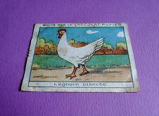 LES POULES LEGHORN BLANCHE CHROMO CHOCOLAT PUPIER JOLIES IMAGES 1930