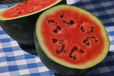 "100 Watermelon seeds""icebox"" watermelon, Sugar Baby- NON-GMO Heirloom."