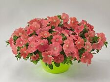 "Trailing Petunia Seeds Success Salmon 25 Pelleted Seeds ""NEW"" true color"