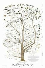 "Tree of Life Art Science Posters Christian Art Laminated Print Wall Art 24"" x36"""