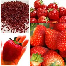 Hot Supersweet Red Climbing Strawberry Seeds Garden Fruit Delicious Plant  J